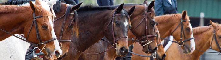 Events - Sumter Equestrian Center Hunter, Jumper, Dressage